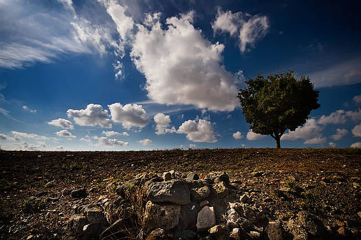 The tree the rocks the clouds by Franco Farina