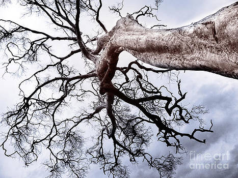 The Tree V by Wendy Slee