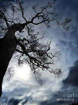 The Tree Vl by Wendy Slee