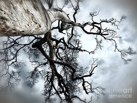The Tree Vll by Wendy Slee