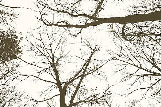 The Trees Above by Brin Schooley