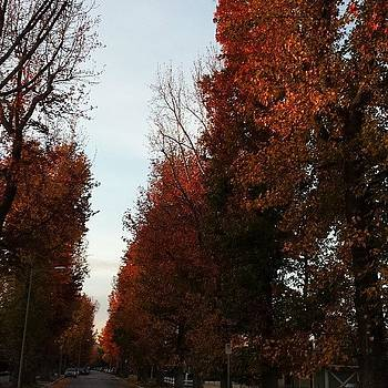 The Trees Are On Fire In The Best Way by Jeremiah Adams