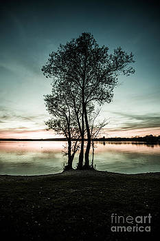 Hannes Cmarits - the trees silhouette