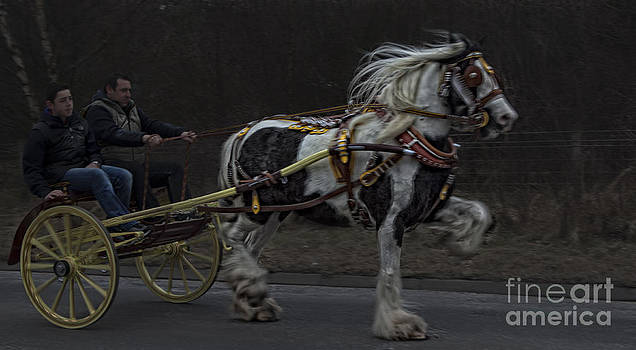 The Trotter by Peter Arris