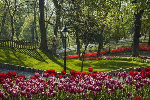 The Tulip Garden by Ayhan Altun