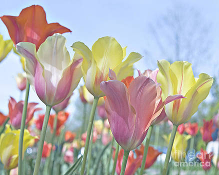 The Tulips of Franklin Park by John Remy