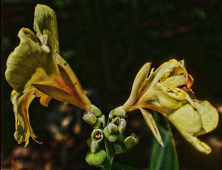 Joe Bledsoe - The Unknown Flower