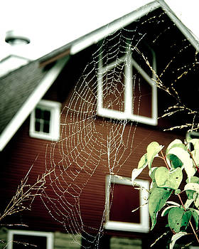 The Web by Kristy Creighton