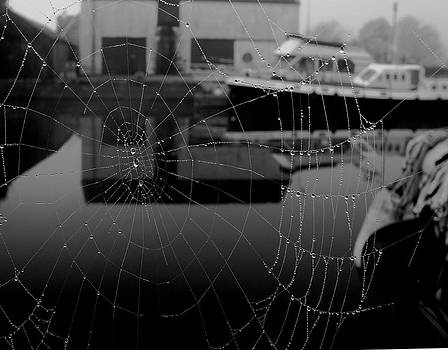 The Web by Peter Skelton