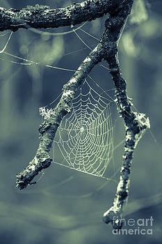Edward Fielding - The Webs We Weave