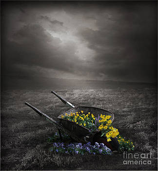 The Wheelbarrow by Lynn Jackson