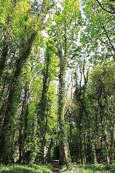 The Whispering Of Heavens Trees by Jenny A Jones