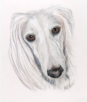 The White Ghost Saluki by Ellen Lyner