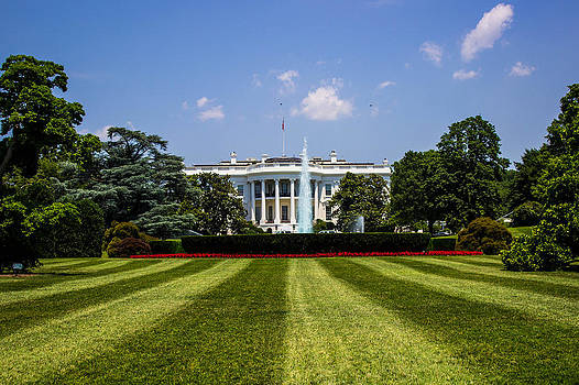 The White House by Patti Colston