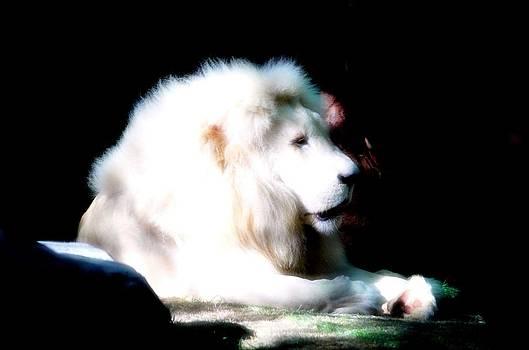 The White Lion by Amanda Struz