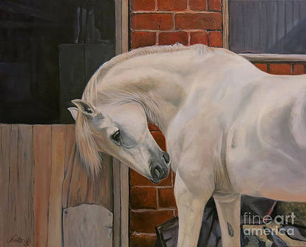 The White Pony by Jeanne Newton Schoborg