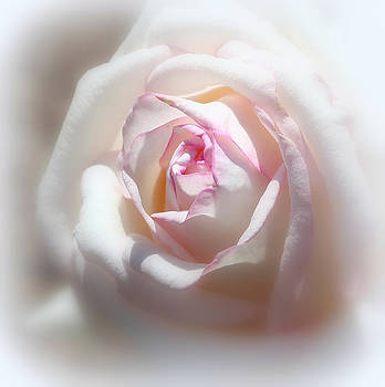 The White Rose by Erin Tucker