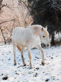 The White Stallion's Winter Walk by Patricia Keller