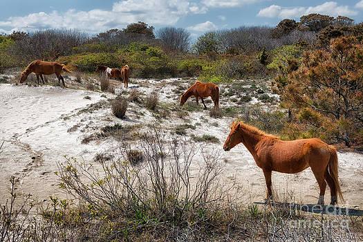 The Wild Ponies of Assateague by doug hagadorn by Doug Hagadorn