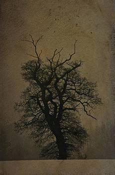 The Winter Oak by Tim Kahane