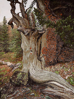 The Wisest Pine by Jeanette Sacco-Belli