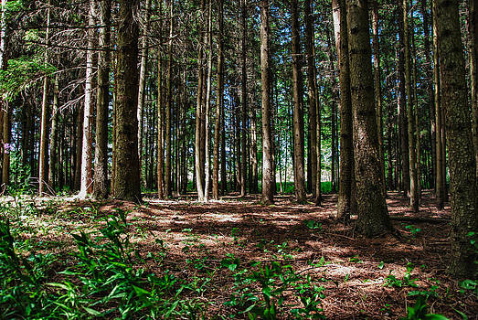 The Woods by Todd Heckert