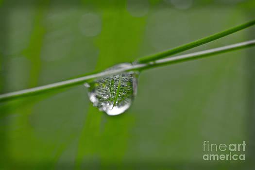 Heiko Koehrer-Wagner - The World in One Little Drop