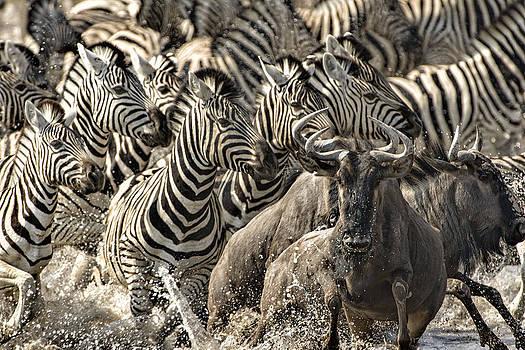 Paul W Sharpe Aka Wizard of Wonders - The Zebra Rush