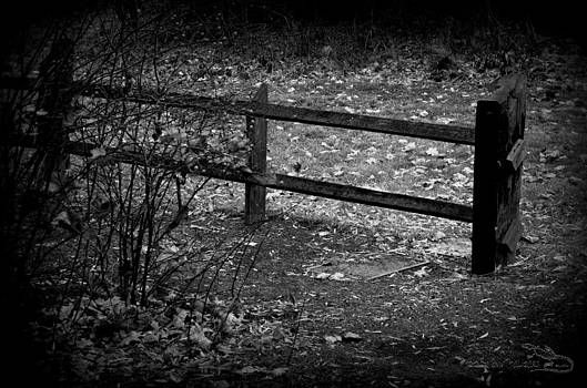 Guy Hoffman - TheFence Black and White