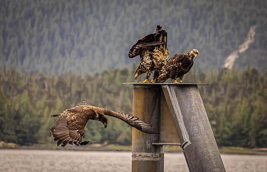 Them Birds by Timothy Latta