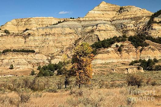 Adam Jewell - Theodore Roosevelt Landscape