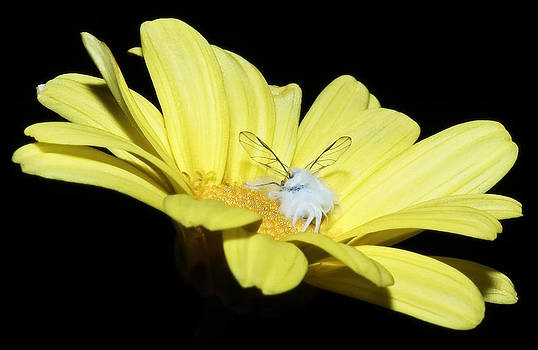 There's A Fairy In My Flower by Tammy Schneider