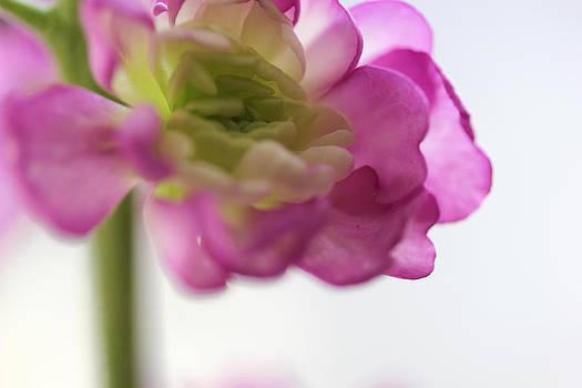 Think Spring by Kim Thompson