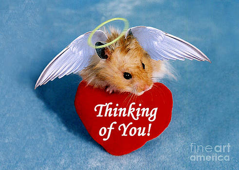 Jeanette K - Thinking of You Hamster