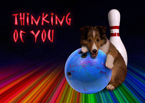 Jeanette K - Thinking of You Sheltie Puppy