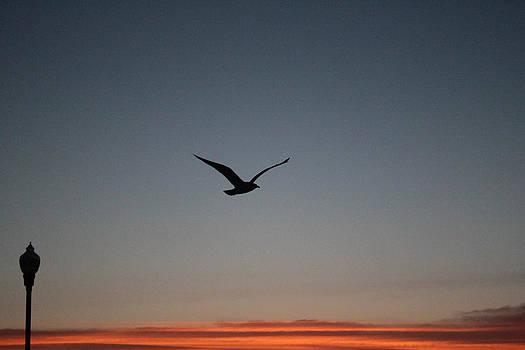 Third of the trio sunrise at beach by Renee Braun