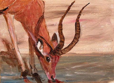 Thirsty Impala by Elayne Doehrel