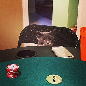 This Cat!!! #getdat #paws #poker by Crystal Duncanson