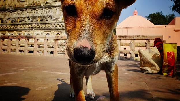 This guy at the Mahabodhi Stupa in Bodhgaya by Greg Holden