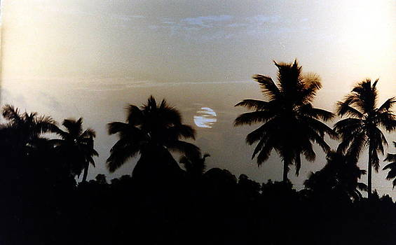 This is a palms world by Norberto Medina Jr