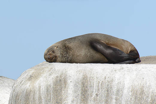 Paul W Sharpe Aka Wizard of Wonders - This is South Africa No.  3 - African Fur Seal Sleeping on a Whi