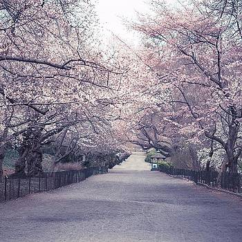 This Is The Bridle Path In Central Park by Vivienne Gucwa