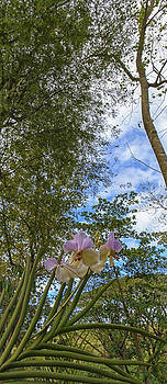 Paul W Sharpe Aka Wizard of Wonders - This is the Philippines No.84 - Pink Orchid in the Forest