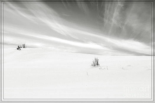 This is winter by Janique Robitaille