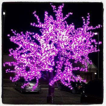 This Tree Is Purple by Jeff Bickley
