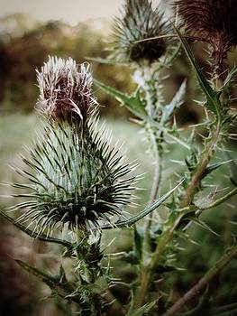 Thistle by Gilbert Photography And Art