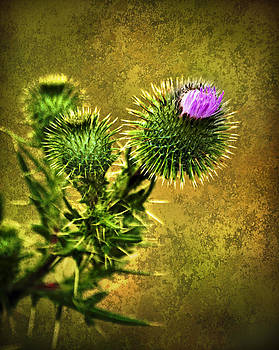 Thistle by Tony Steinberg