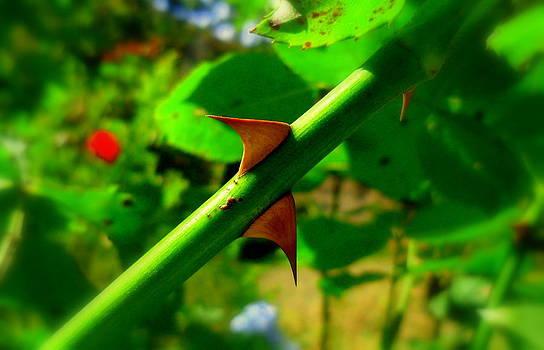 Thorns by Salman Ravish