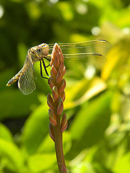 Those Wings by Adel Nemeth
