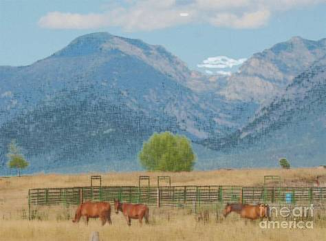 Three Beauties by Terri Johnson